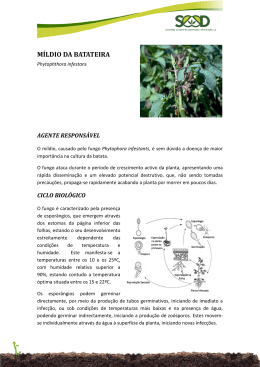 Míldio da Batateira PDF