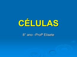 8° ano –Profª Elisete