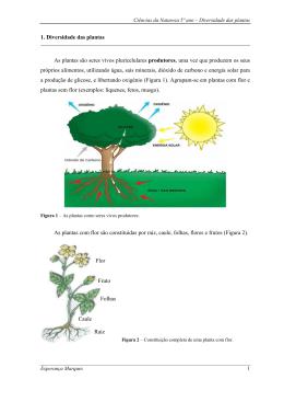 1. Diversidade das plantas As plantas são seres