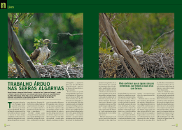 Revista Foto Digital - Artigo Sobre as Águias de Bonelli