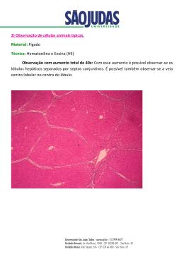 2)Observação de células animais típicas