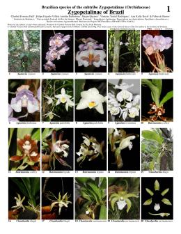 Zygopetalinae of Brazil 1 - Field Guides