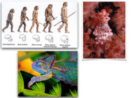 Características dos seres vivos 2