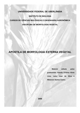 Raiz - Anatomia Vegetal - Universidade Federal de Uberlândia