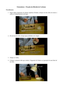Fotossíntese - Fixação do Dióxido de Carbono