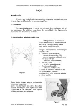 BAÇO Anatomia