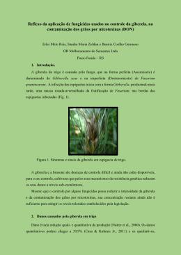 Reflexo da aplicação de fungicidas usados no