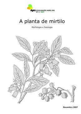 A planta de mirtilo – Morfologia e Fisiologia
