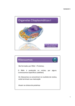 (Microsoft PowerPoint - Aula 14 - Organelas Citoplasm\341ticas I