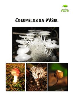 Cogumelos da PVSul - Palavra da Vida