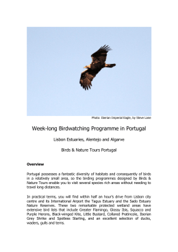 Week-long Birdwatching Programme in Portugal