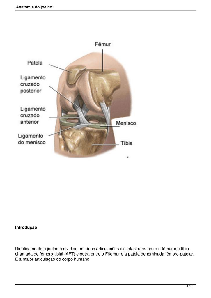 Anatomia do joelho - Dr. Gustavo Kaempf